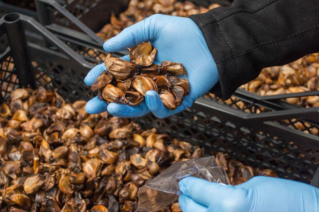 """Así queda el ajo después del proceso químico que lo deja """"negro"""": tiene propiedades nutricionales y también se usa como condimento gourmet. (Gentileza Garlic)"""