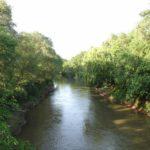 Bell Ville: arrancarán las especies exóticas de la reserva Parque Tau