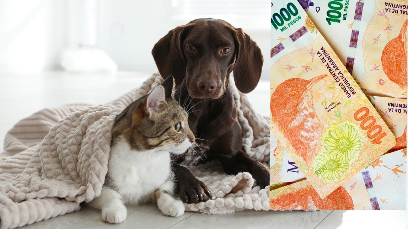 Aumento en gastos para las mascotas   AGENCIA SHUTTERSTOCK Y CEDOC PERFIL